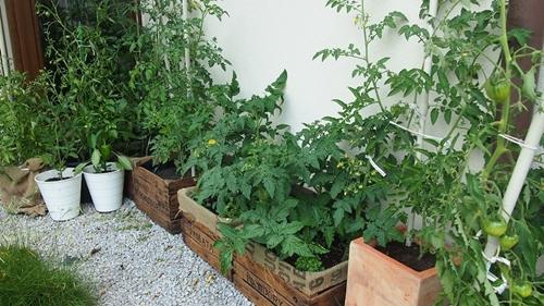 Zielono Zakręceni Uprawa Warzyw W Skrzyniach 12